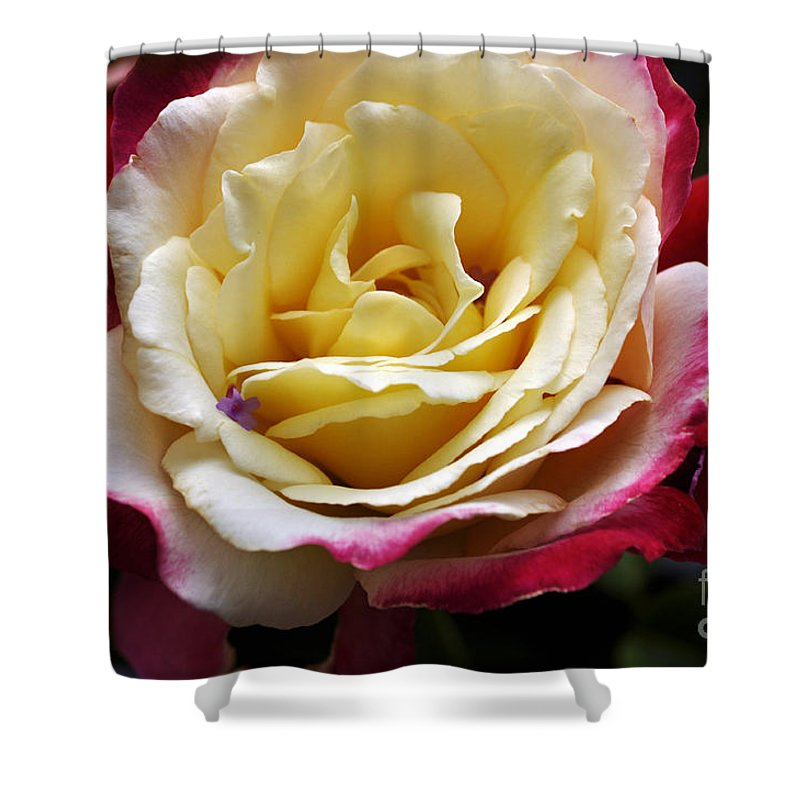 Clay Shower Curtain featuring the photograph Burst Of Rose by Clayton Bruster