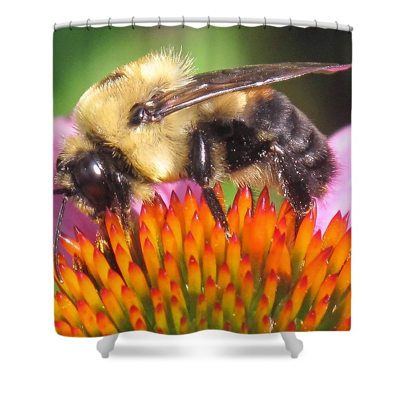Bee Shower Curtain featuring the photograph Busy by Ian MacDonald