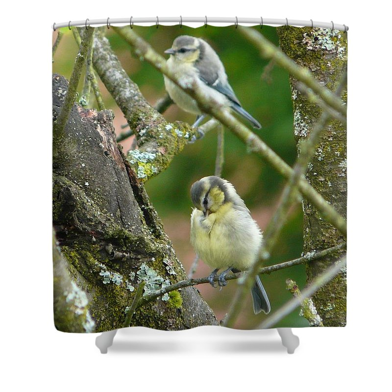 Bird Shower Curtain featuring the photograph Busy Tree by Valerie Ornstein