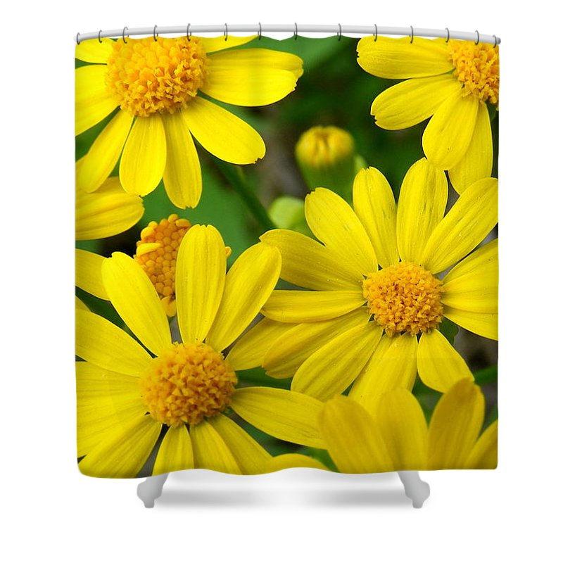 Butter Fields Shower Curtain featuring the photograph Butter Fields by Ed Smith