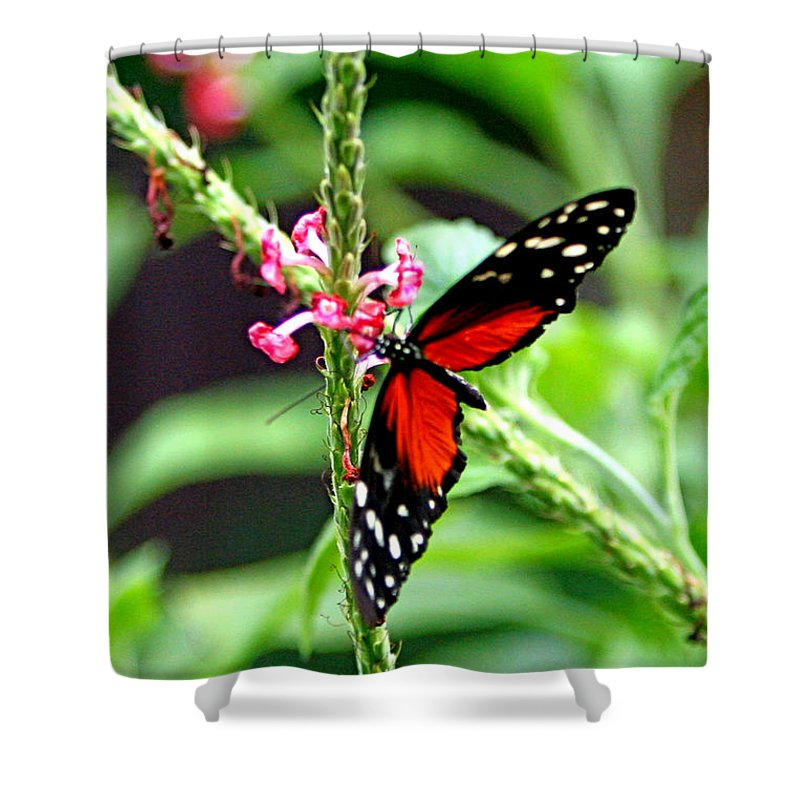 Nature Shower Curtain featuring the photograph Butter by Marle Nopardi