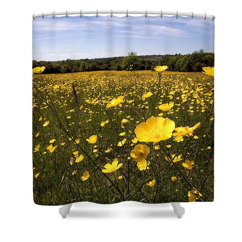 Buttercups Shower Curtain featuring the photograph Buttercup Field by Bob Kemp