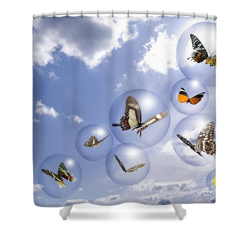 Insects Shower Curtain featuring the photograph Butterflies And Bubbles by Tony Cordoza