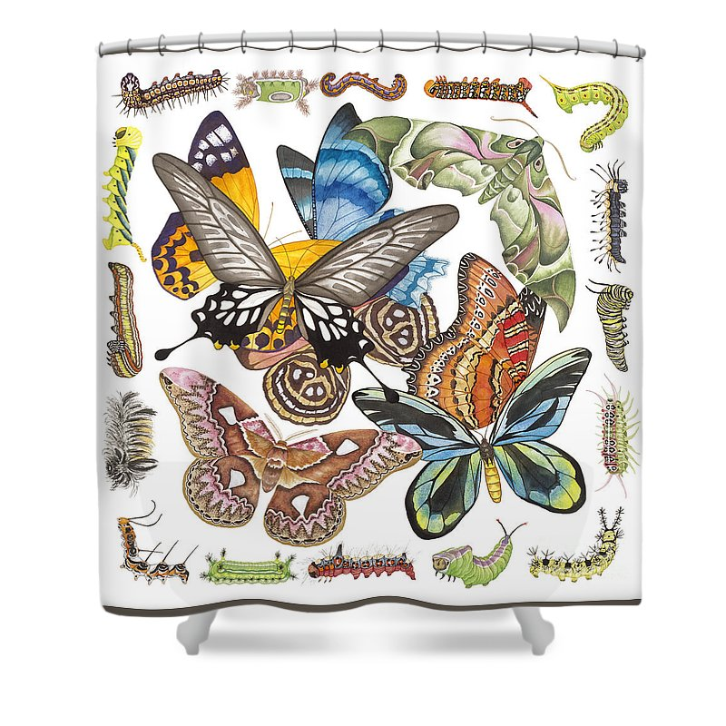 Butterflies Shower Curtain featuring the painting Butterflies Moths Caterpillars by Lucy Arnold
