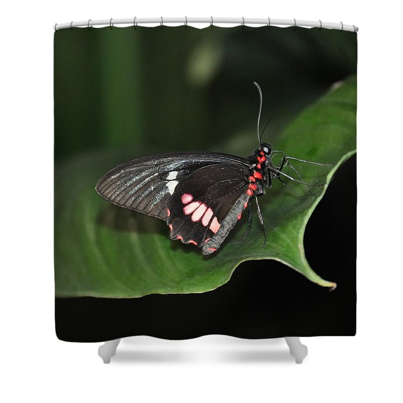 Butterfly Shower Curtain featuring the photograph Butterfly 1 by Rich Bodane