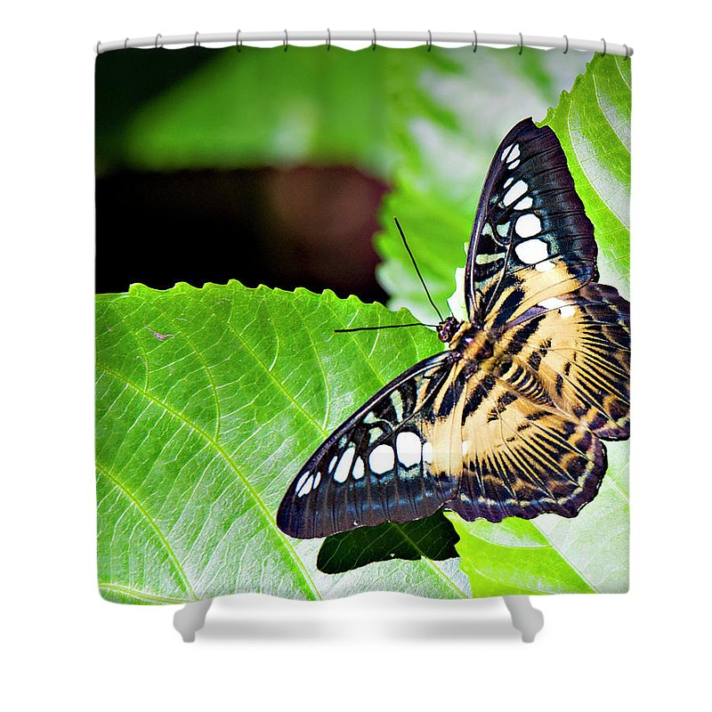Butterfly Shower Curtain featuring the photograph Butterfly 13a by Walter Herrit