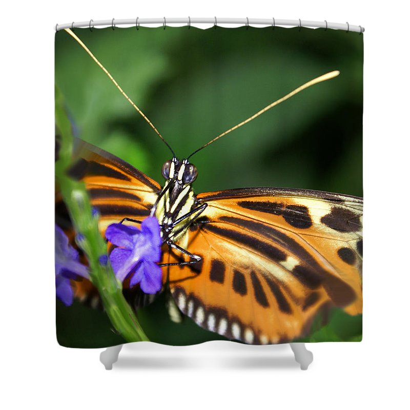 Butterfly Shower Curtain featuring the photograph Butterfly 2 Eucides Isabella by Heather Coen