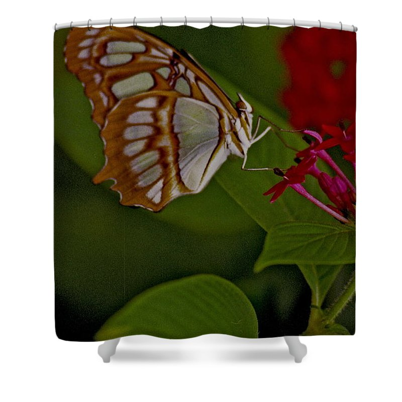 Butterfly Shower Curtain featuring the photograph Butterfly 4 by Michael Peychich