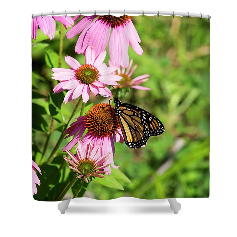 Butterfly Shower Curtain featuring the photograph Butterfly 6 by David Stasiak