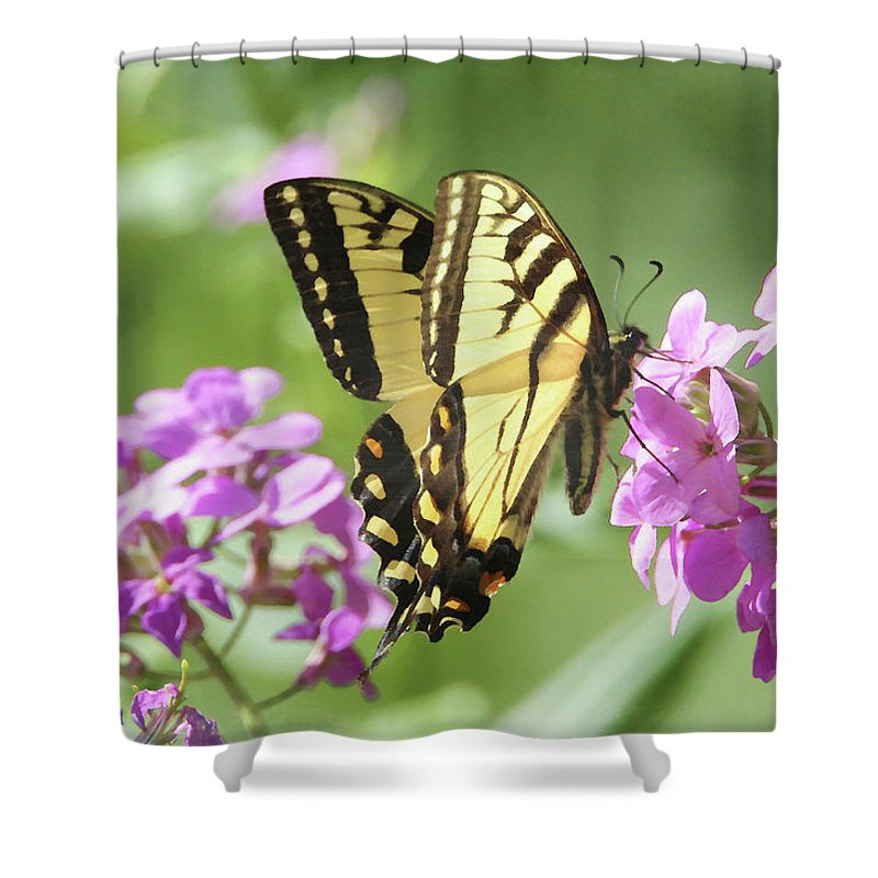 Butterfly Shower Curtain featuring the digital art Butterfly #9 by David Stasiak