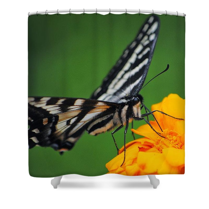 Butterfly Shower Curtain featuring the photograph Butterfly Afternoon by Ann Dickinson