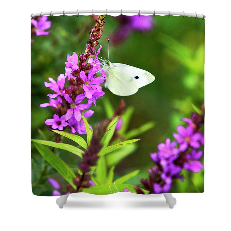 Butterfly Shower Curtain featuring the photograph Butterfly And Bouquet by Christina Rollo