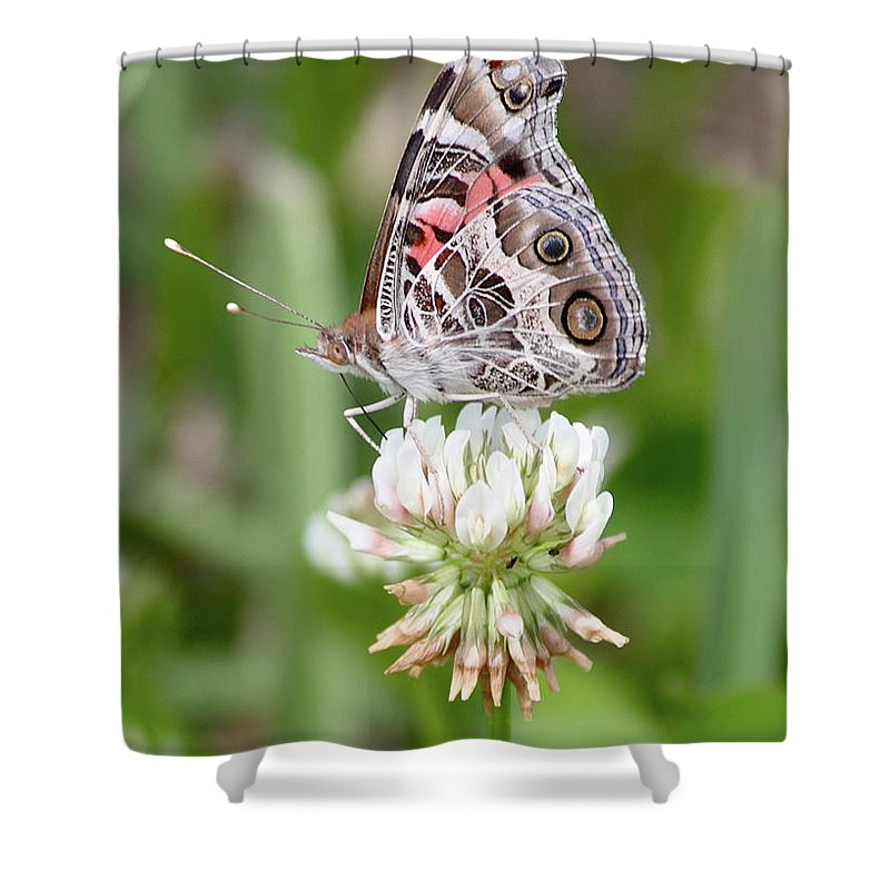 Butterfly Shower Curtain featuring the photograph Butterfly And Bugs On Clover by Carol Groenen