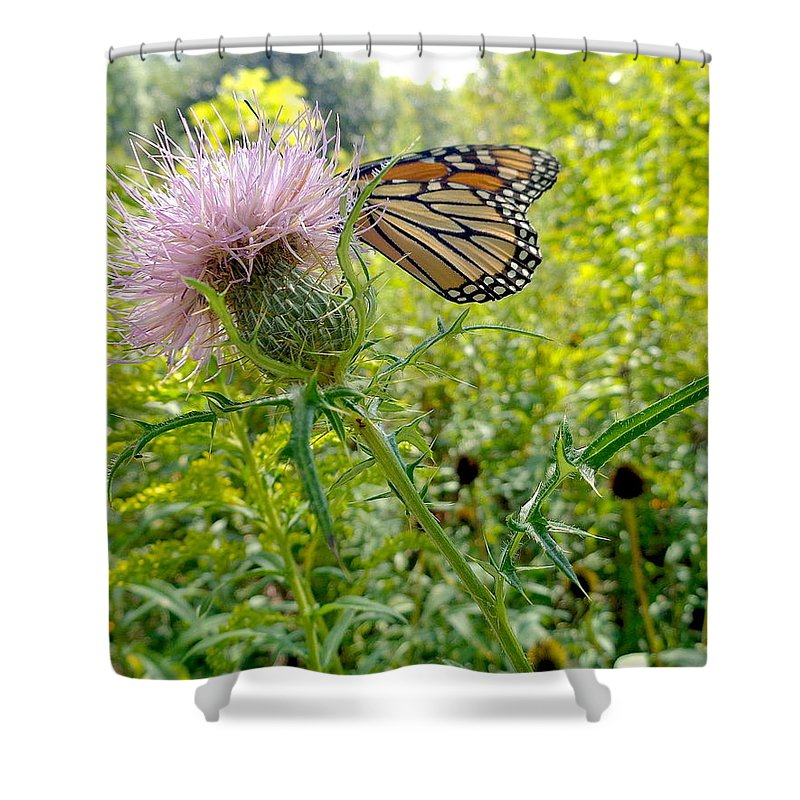 Butterfly Shower Curtain featuring the photograph Butterfly And Pink Wildflower by Wendy Yee