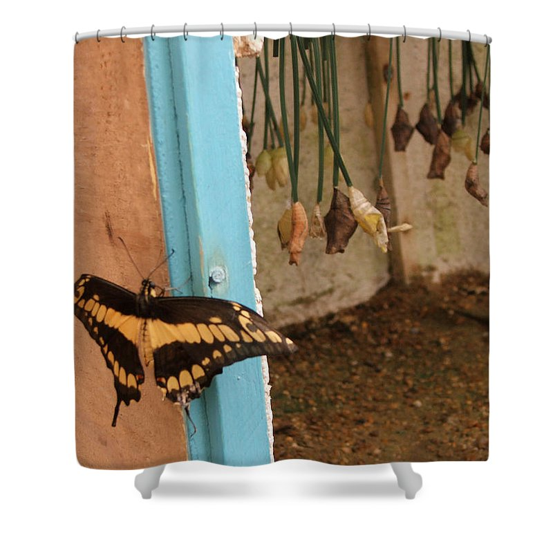 Butterfly Shower Curtain featuring the photograph Butterfly Drying His New Wings by Heather Lennox