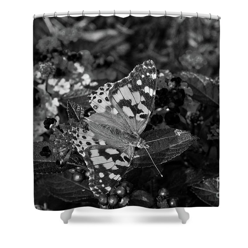 Butterfly Shower Curtain featuring the photograph Butterfly by Jeffrey Miller