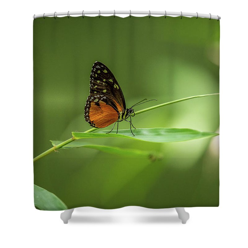 Butterfly Shower Curtain featuring the photograph Golden Helicon Butterfly by Jimmy Tran