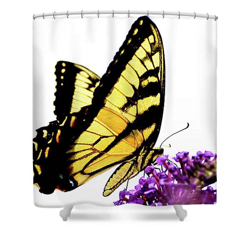 Butterfly Shower Curtain featuring the photograph Butterfly by Julie Niemela