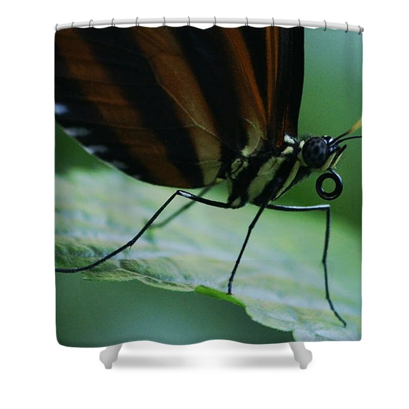 Butterfly Shower Curtain featuring the photograph Butterfly Leaf by Linda Shafer
