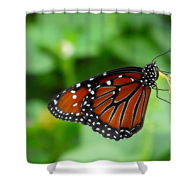 Butterfly Shower Curtain featuring the photograph Butterfly by Nora Martinez