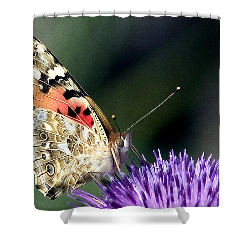 Butterfly Shower Curtain featuring the photograph butterfly on a Silybum marianum I by Nahum Budin