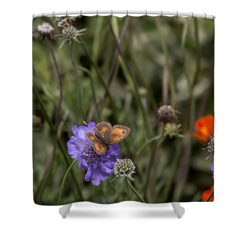 Butterfly Shower Curtain featuring the photograph Butterfly On Flower. by Les OGorman
