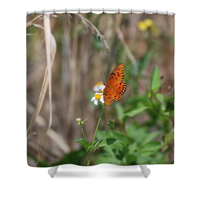 Nature Shower Curtain featuring the photograph Butterfly On Flower by Rob Hans