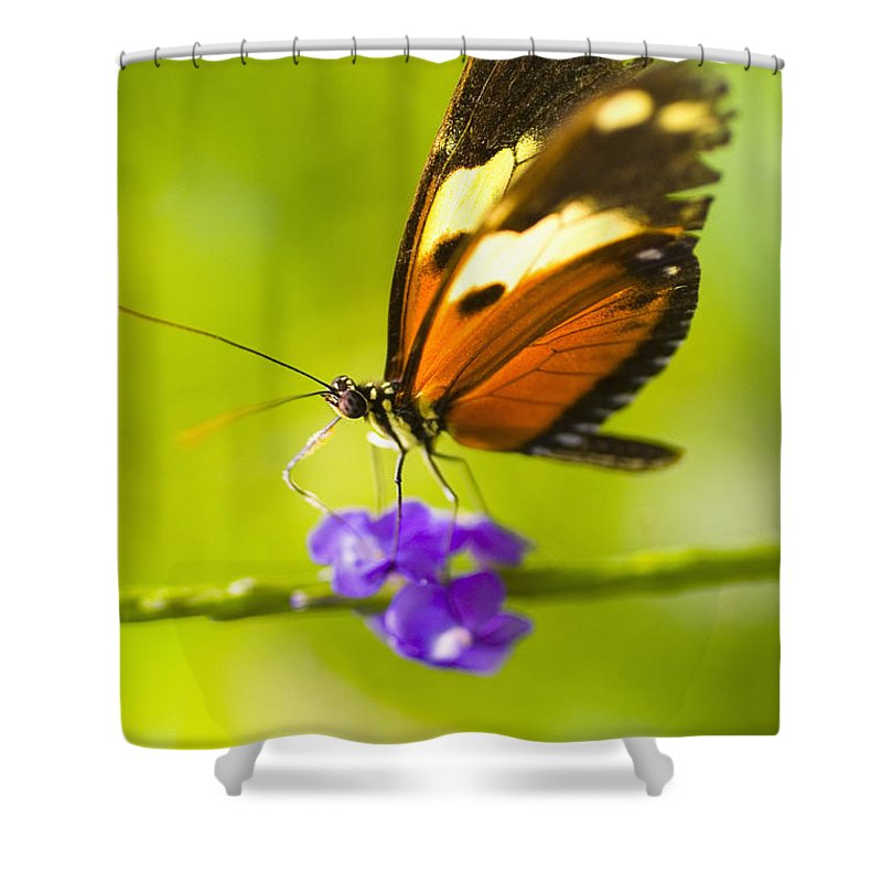 Afternoon Shower Curtain featuring the photograph Butterfly On Flower by Tomas del Amo - Printscapes
