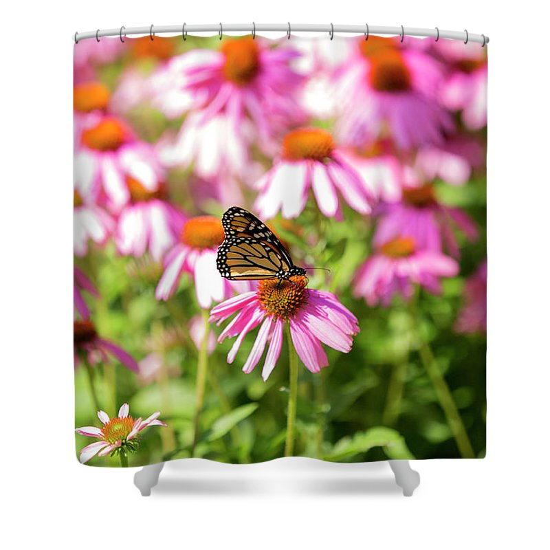 Butterfly Shower Curtain featuring the photograph Butterfly On Flowers by David Stasiak