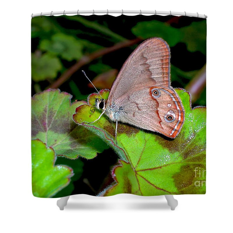 Photography Shower Curtain featuring the photograph Butterfly On Geranium Leaf by Kaye Menner