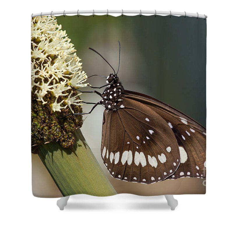 Butterfly Shower Curtain featuring the photograph Butterfly On Grass Tree Flowers by Sher Stoll