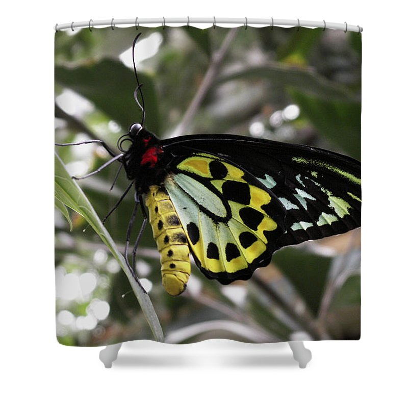 Butterfly Shower Curtain featuring the photograph Butterfly One by Nancy Griswold
