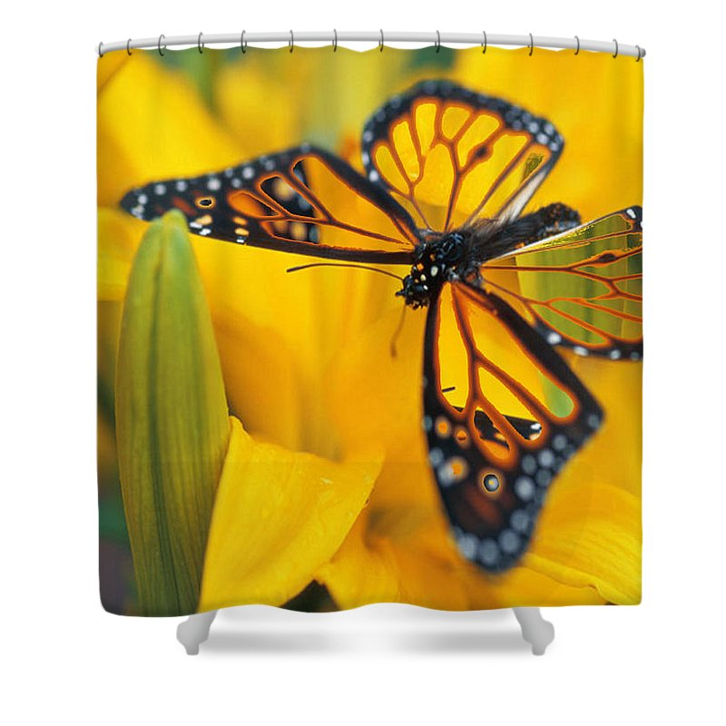 Butterfly Shower Curtain featuring the digital art Butterfly by Tim Allen