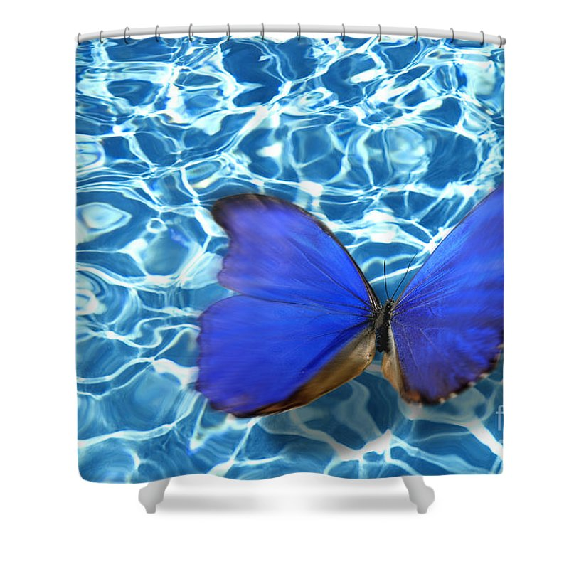 Animals Shower Curtain featuring the photograph Butterfly by Tony Cordoza