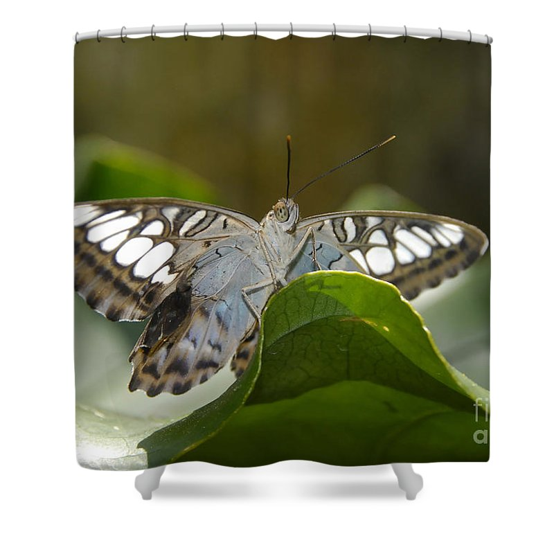 Pretty Shower Curtain featuring the photograph Butterfly Watching by David Lee Thompson