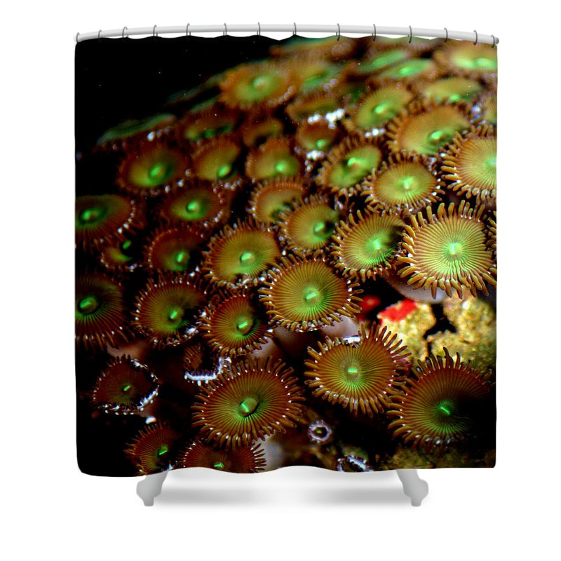 Underwater Shower Curtain featuring the photograph Button Polyps by Anthony Jones