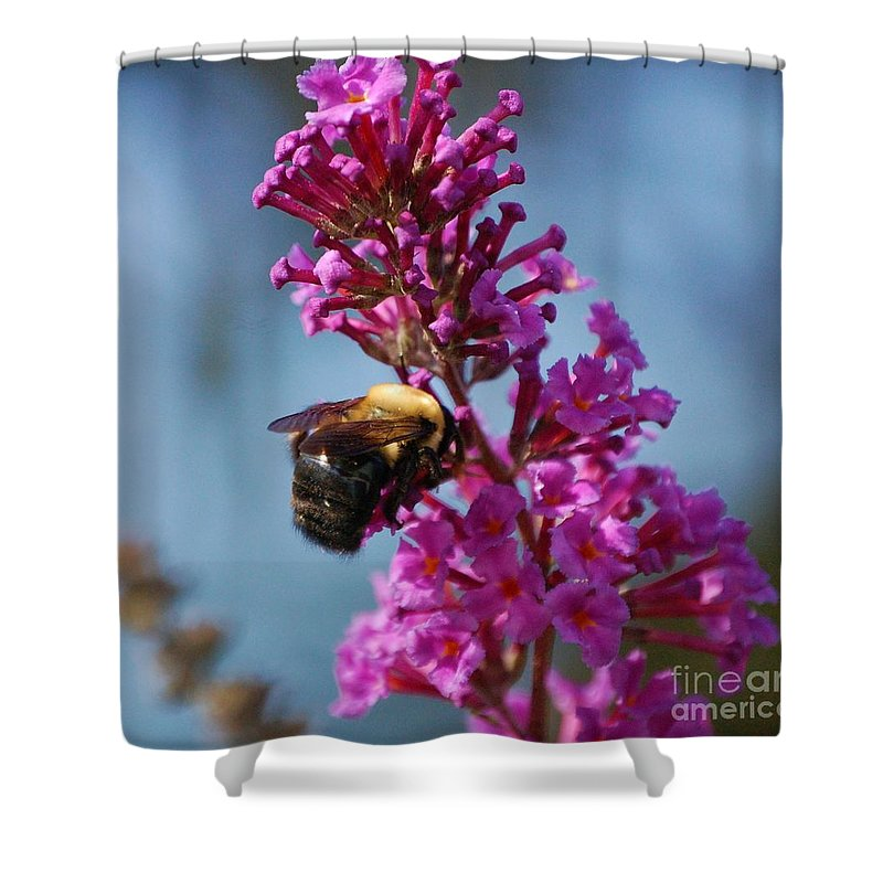 Bee Shower Curtain featuring the photograph Buzzed by Debbi Granruth