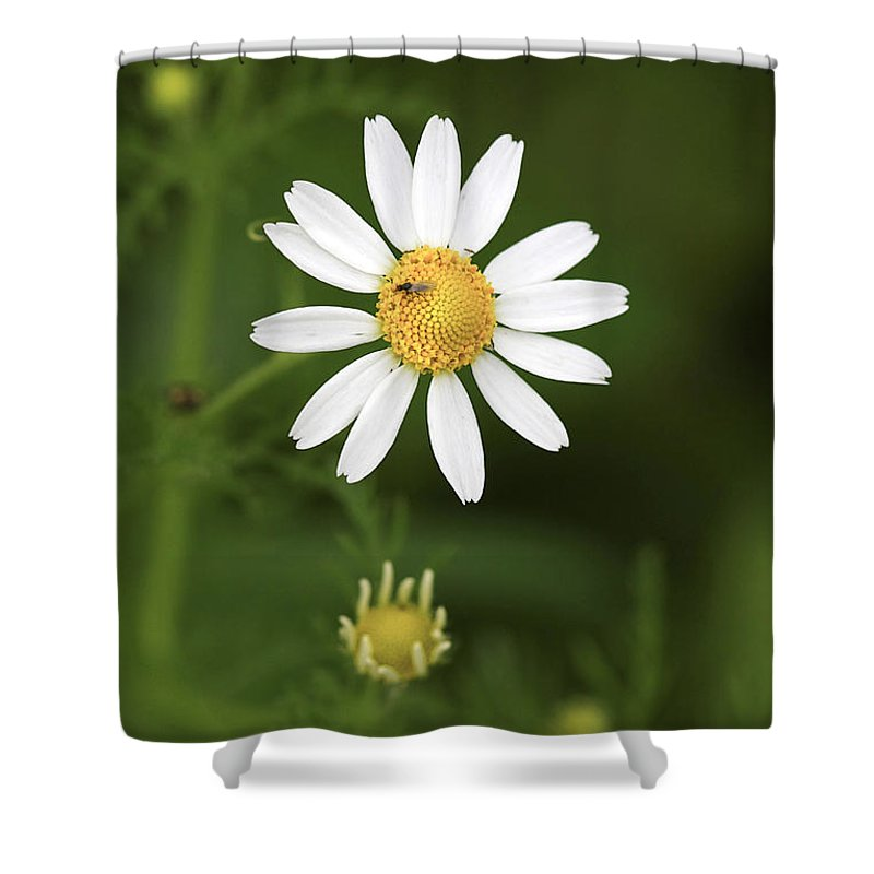 Flower Shower Curtain featuring the photograph By The Pond by Deborah Benoit