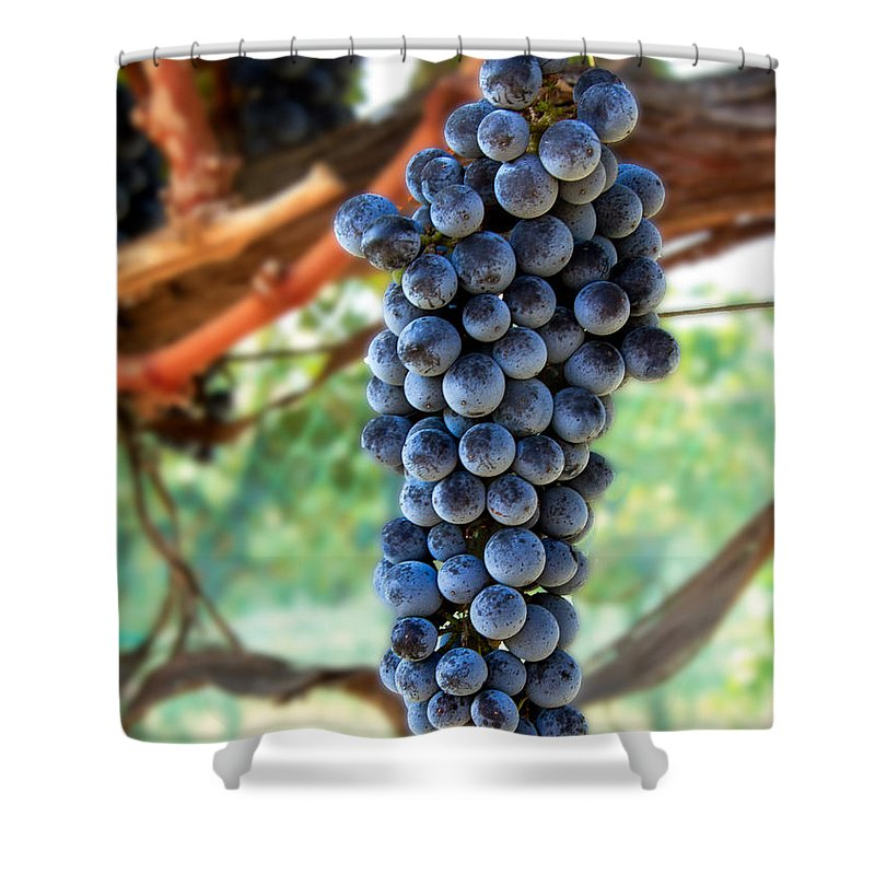 Red Wine Shower Curtain featuring the photograph Cabernet Sauvignon by Robert Bales