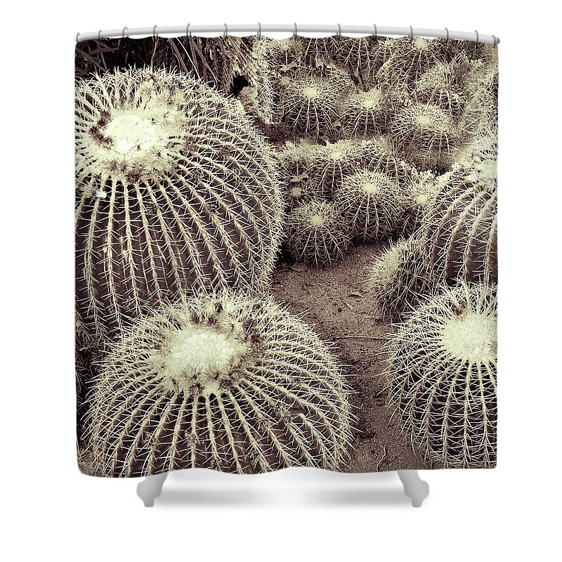 South Palm Canyon Shower Curtain featuring the photograph Cacti Community by William Dey