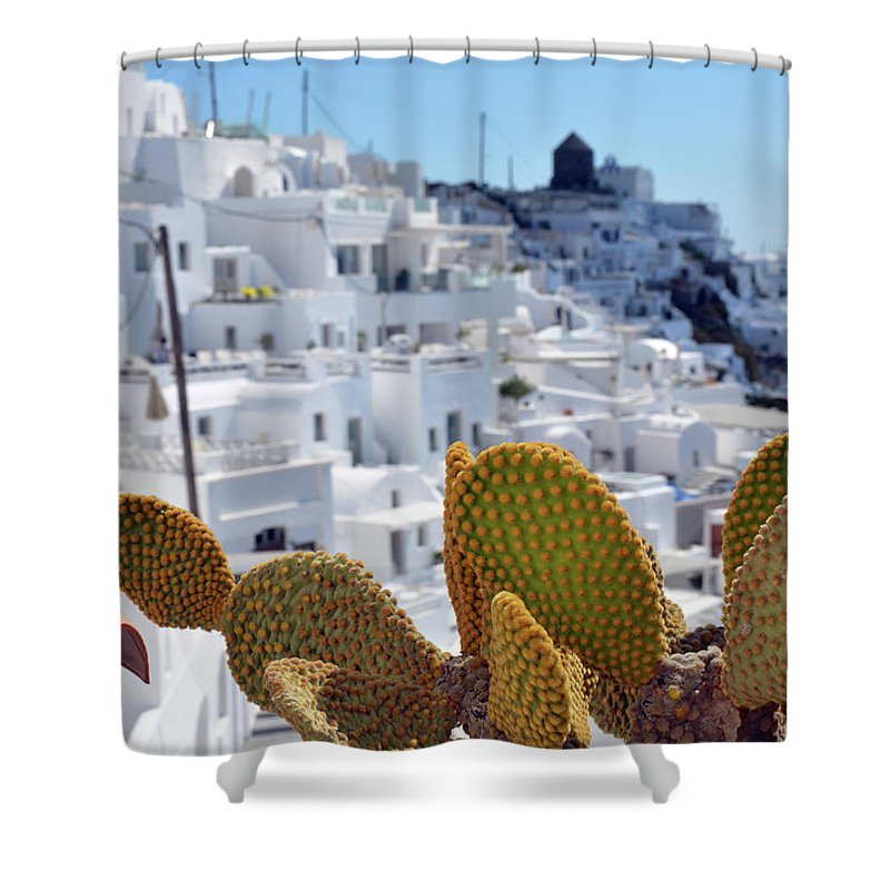 White Shower Curtain featuring the photograph Cacti In Santorini, Greece by Oana Unciuleanu