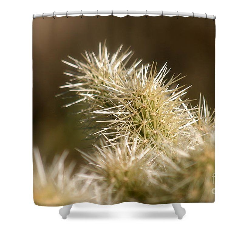 Cactus Shower Curtain featuring the photograph Cacti by Nadine Rippelmeyer