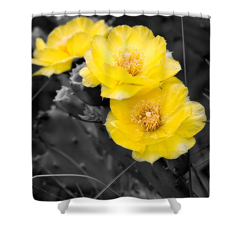 Cactus Shower Curtain featuring the photograph Cactus Blossom by Christopher Holmes