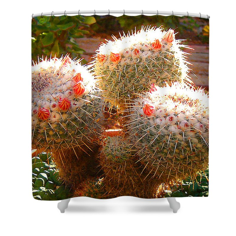 Landscape Shower Curtain featuring the photograph Cactus Buds by Amy Vangsgard