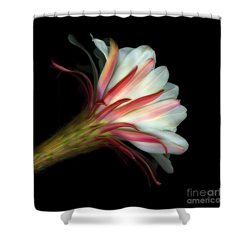Scanart Shower Curtain featuring the photograph Cactus Flower by Christian Slanec