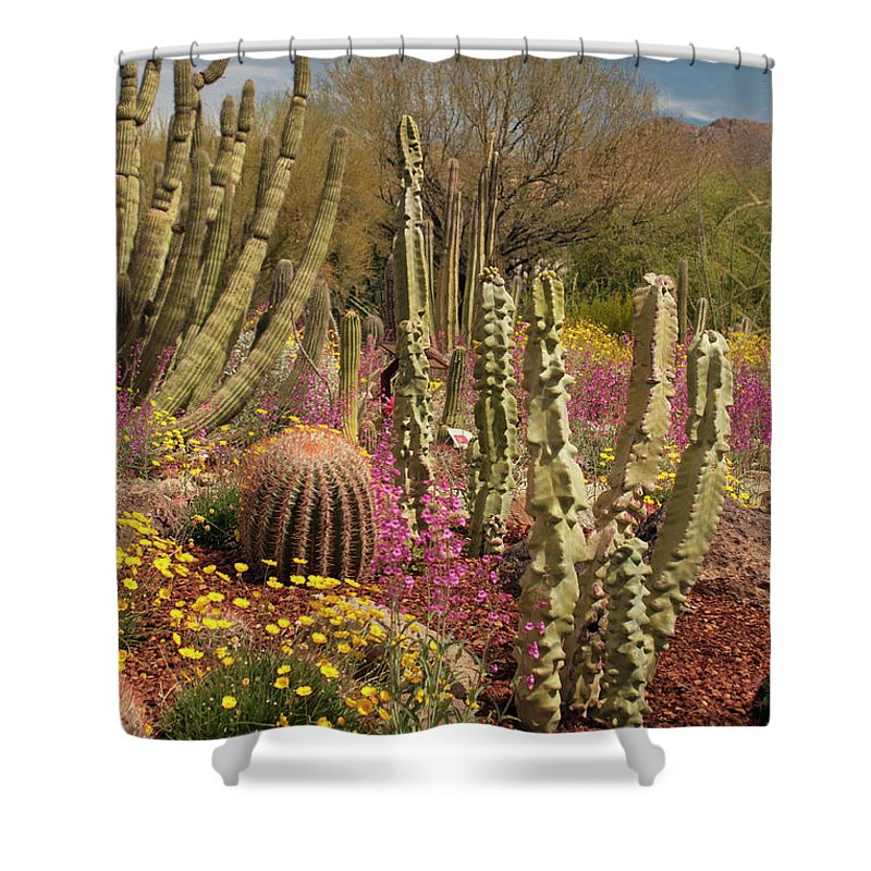 Cactus Shower Curtain featuring the photograph Cactus Garden II by Ana Gonzalez