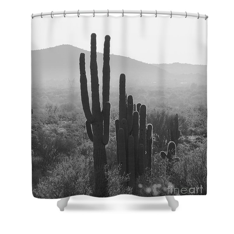Cactus In Black And White Shower Curtain featuring the photograph Cactus In Black And White by Randy Morgan