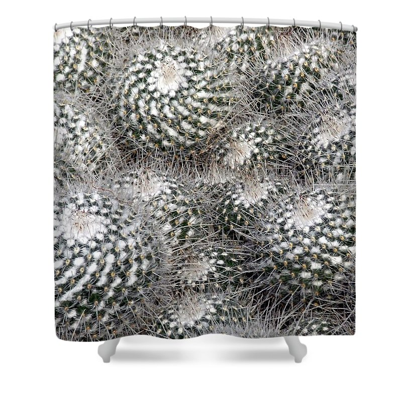 Cactus Shower Curtain featuring the photograph Cactus by Mindy Newman