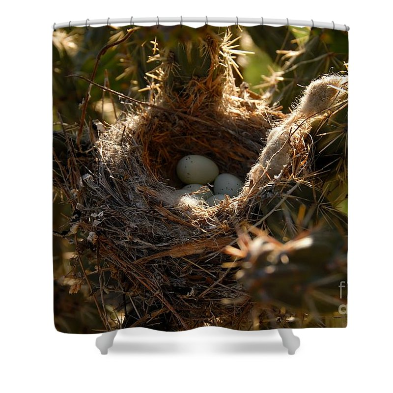 Cactus Shower Curtain featuring the photograph Cactus Nest by David Lee Thompson