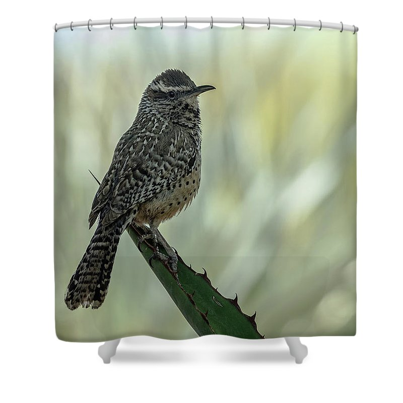 Cactus Shower Curtain featuring the photograph Cactus Wren 0295 by Tam Ryan
